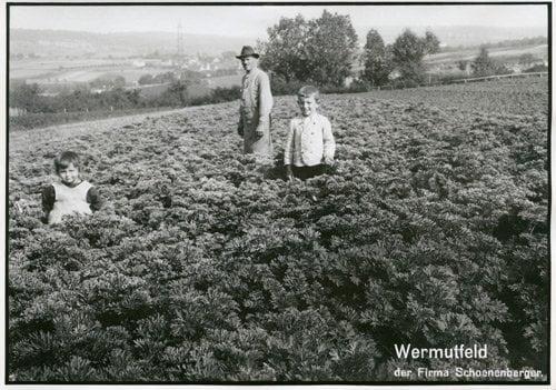 Wermutfeld bei Magstadt